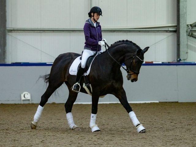 Donna Diva Equestrian