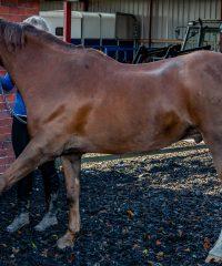 Elite Equine Therapies