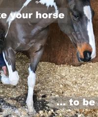 Intelligent Horsemanship