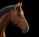 Horse Finance