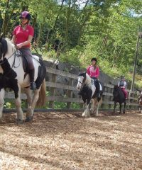 Witherslack Hall Equestrian Centre